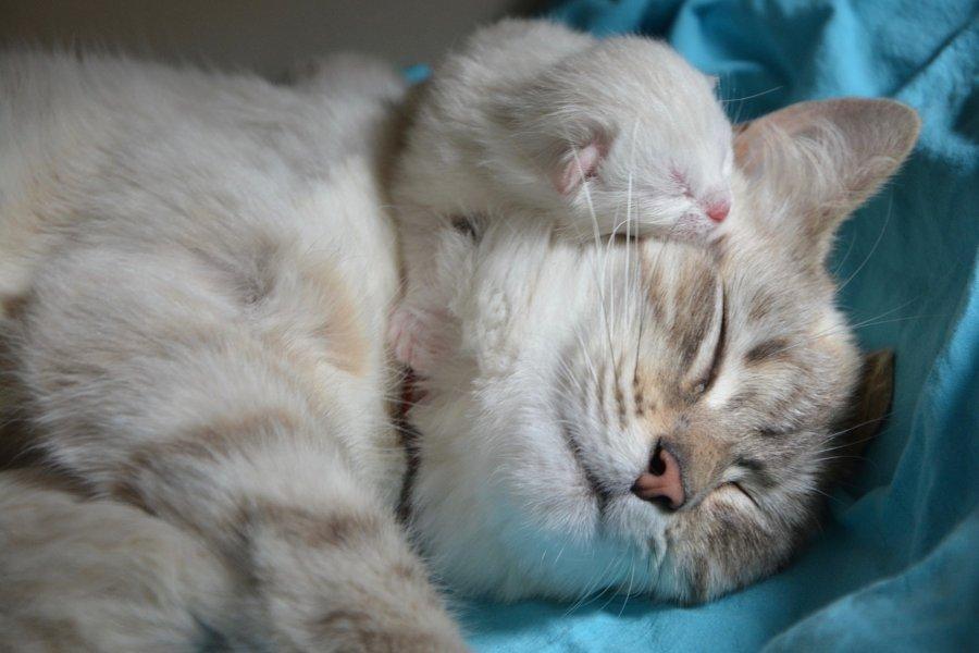 Destete de gatos a qué edad dejan de amamantar.