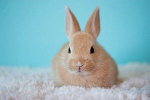 Cuantos años vive un conejo