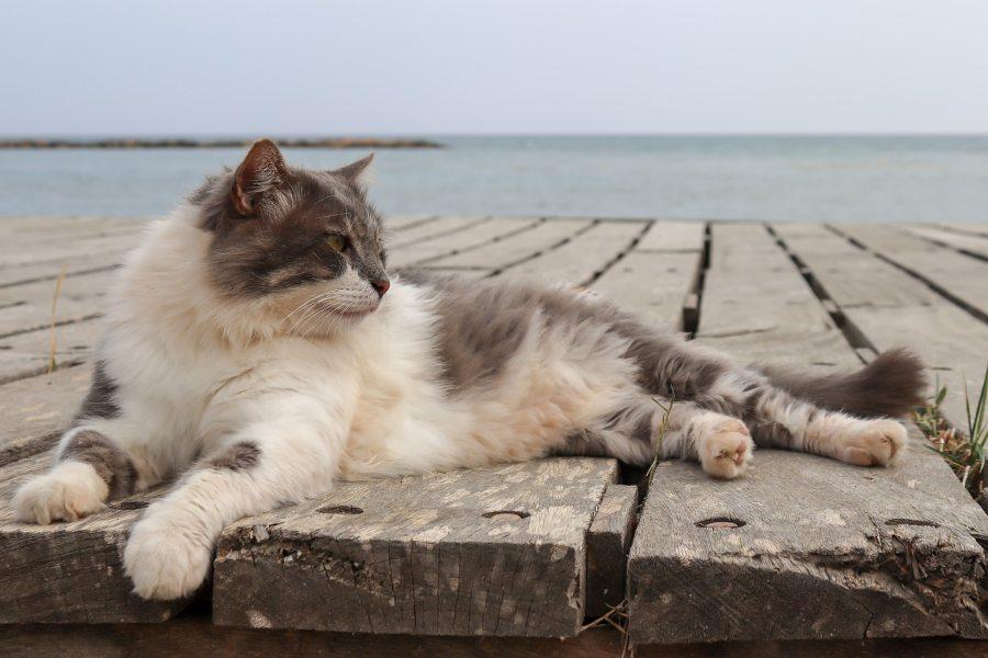 Vacaciones con gatos