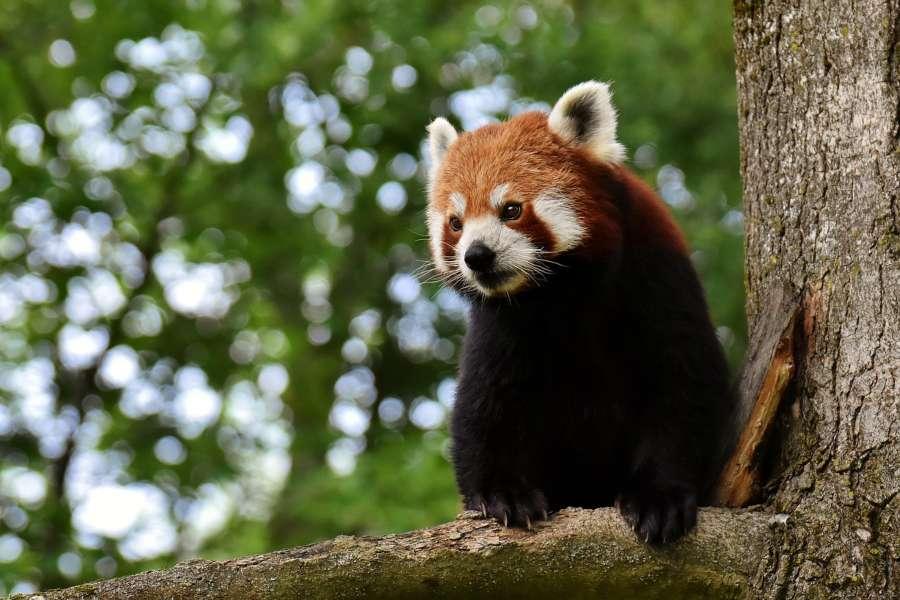 Animales más bonitos del mundo