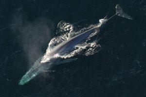 Los-animales-marinos-mas-grandes-del-mundo