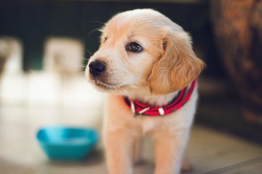 vacunas-perro