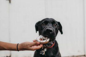 chocolate-en-perros