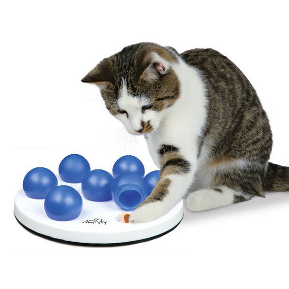 Intelligence for cats Cat Activity solitaire game