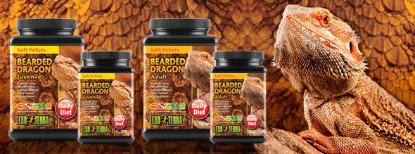 Complete Dragon bearded youth of EXO TERRA fodder dry food for Pogonas young people in growth