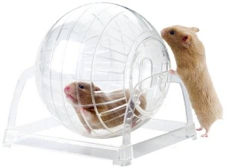 Exercise ball for rodents Living World