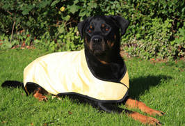 Cool dog coat enfriadora anti heat prevents from heat stroke dog