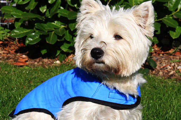 Layer antisofocos ideal for walking in summer dog