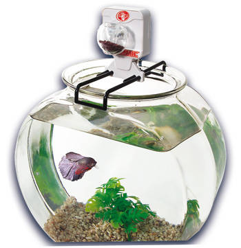bettamatic comedero automatico betta peces