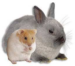 Rabbit and hamster