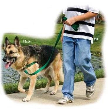 Easy walk harness management for dogs that pull