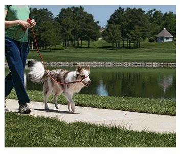 Easy walk gentle leader collar de control para perros educados