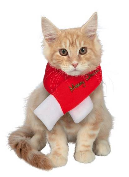 Cat CHRISTMAS jingle bells Christmas cat scarf merry