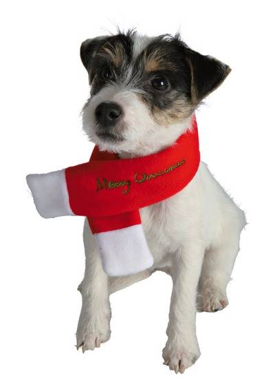 Christmas dog jingle bells dog scarf scarf merry