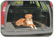 Cage in the car