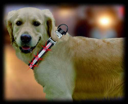Collar con luces LED para perros