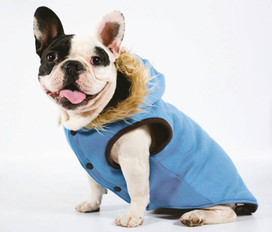 clothes for dogs Blue sweatshirt with hood<p>
