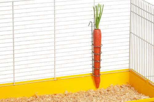 Metal stand holder carrots for rodents