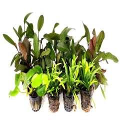 Pack acuario amazónico 25 plantas