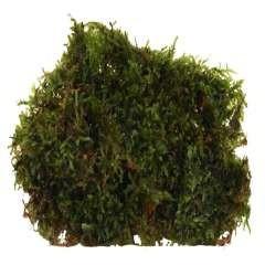 Planta acuario Vasicularia Dubyana 'Musgo de Java'