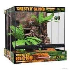 Kit terrario gecko cresta