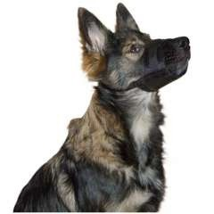 Bozal de nylon Kerbl para perros color Negro