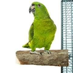 Percha de tronco pequeña para aves