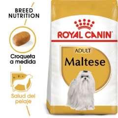 Royal Canin Bichón Maltés Adult pienso seco para perro adulto