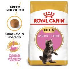 Royal Canin Kitten Maine Coon pienso para gatito