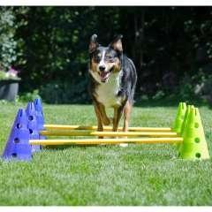 Kit de agilidad y coordinación para perros