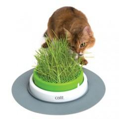 Centro de hierba gatera Catit Senses 2.0 Grass Planter