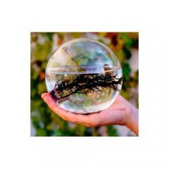Ecosfera redonda grande