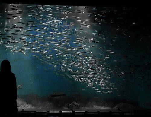 10 reglas básicas para un acuario exitoso