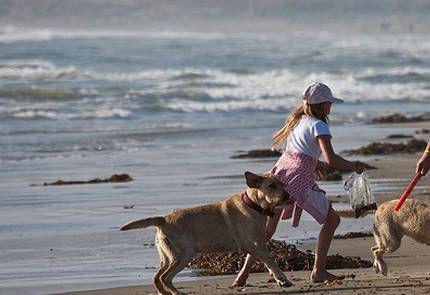 Jugar con tu perro