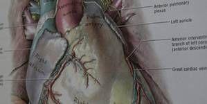 Enfermedad causada por el gusano del corazón, Filariosis