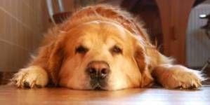 ¿Como ayudar a mi perro o gato con artrosis?