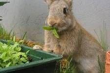 Como enseñar a tu conejo a usar su bandeja sanitaria