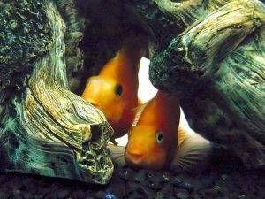 Algunos errores que debes evitar en tu acuario