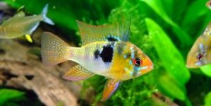 Guía para usar los medicamentos de Seachem en el acuario