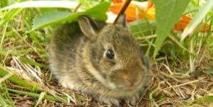 Los conejos y el verano. Como cuidarlos del calor