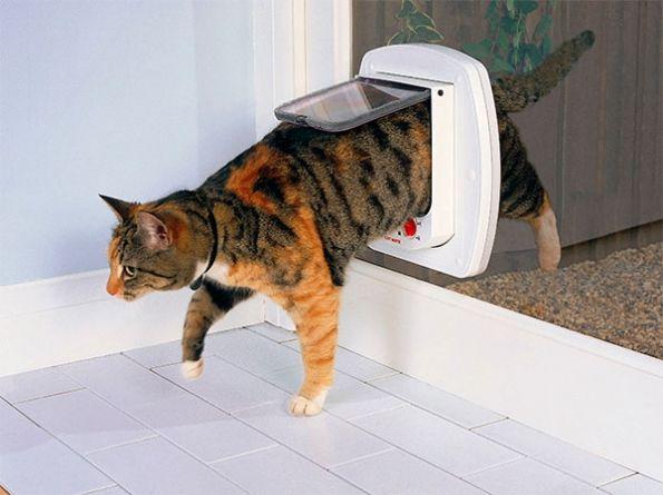 ¿Para qué necesito una puerta para gatos?