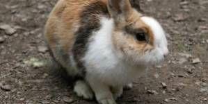 Los primeros días de un conejo en su nuevo hogar