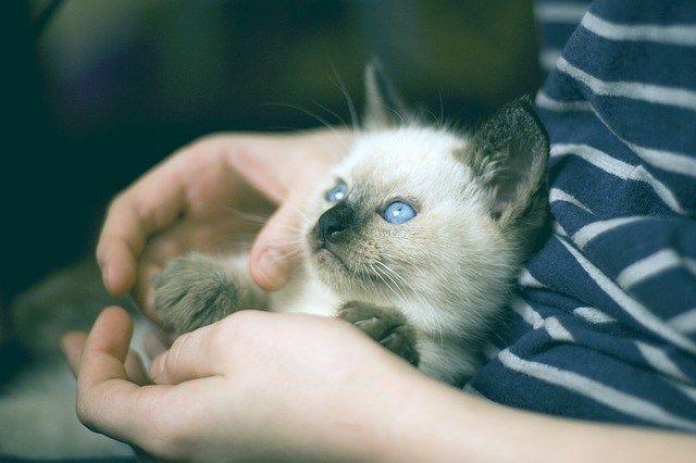 ¿A qué se deben las bolas de pelo en los gatos?