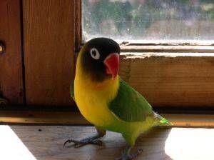 ¿Sabías que el teflón es tóxico para todas las aves?