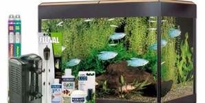 Kits de acuarios: la mejor opción para principiantes