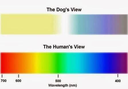 La visión del perro
