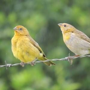 ¿Mi pájaro es hembra o macho?