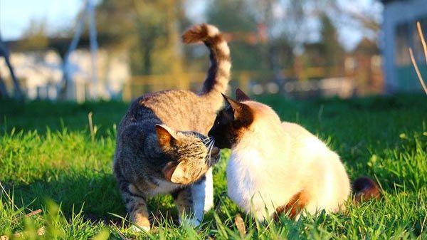 gato-roza-nariz