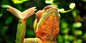 ¿Cómo incubar huevos de reptiles?