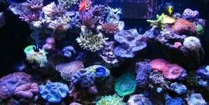 ¿Es malo que mis peces estén siempre en la superficie?